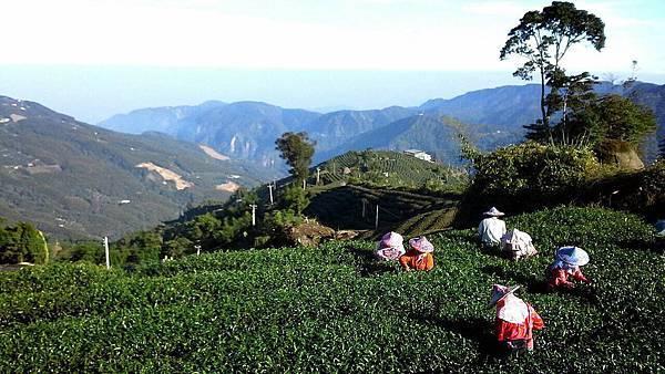 009泰獅茶農場.jpg