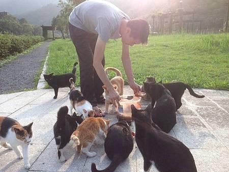 貓東家喵侍與喵食的召喚