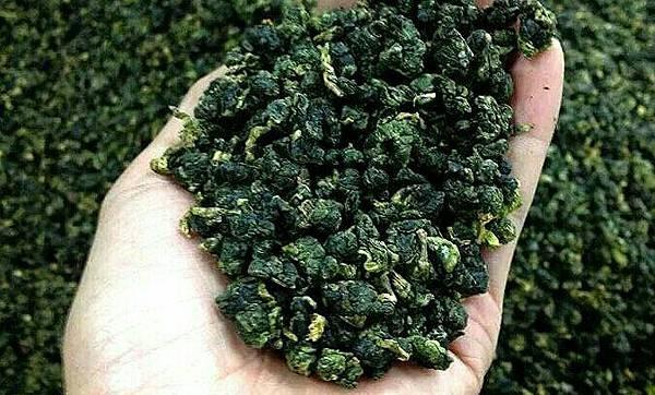 貓茶坊- 從茶園所做出來的粗製茶
