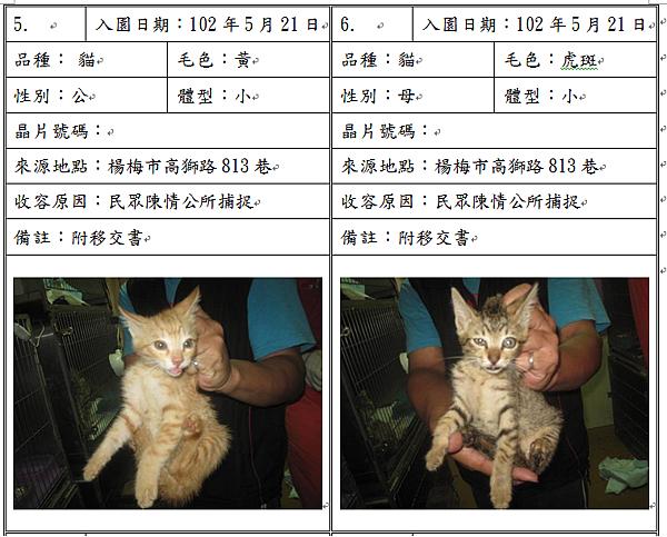 cat052104