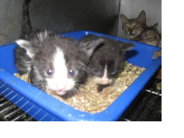 kitten8.jpg