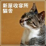CatFirst.jpg