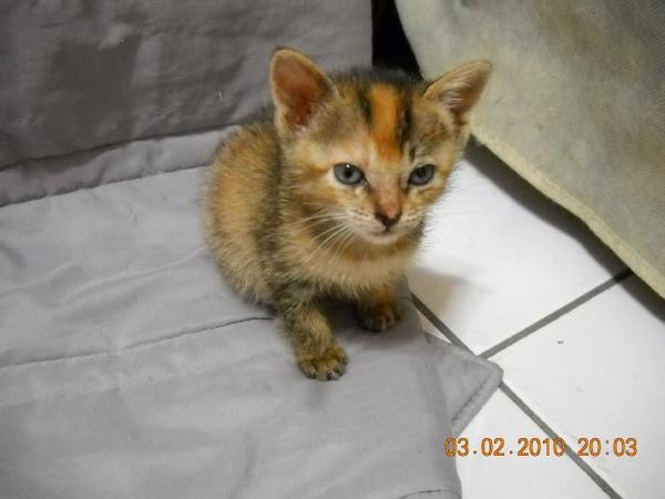 cat5.bmp