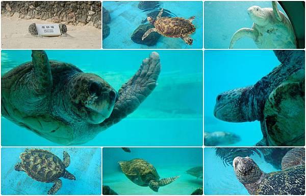 海生館-海龜.jpg