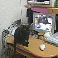 bbcat201109-5.JPG