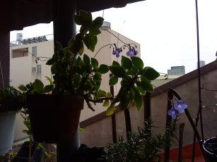 紫色的花-4.jpg