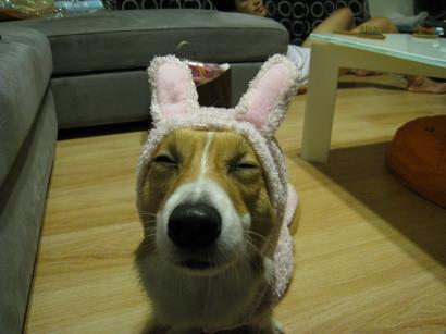 粉紅兔.jpg