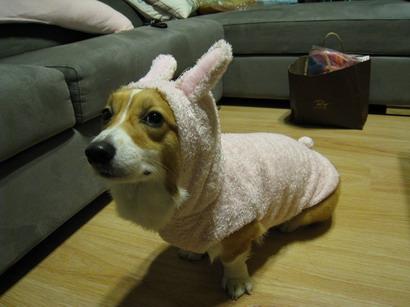 粉紅兔_2.jpg