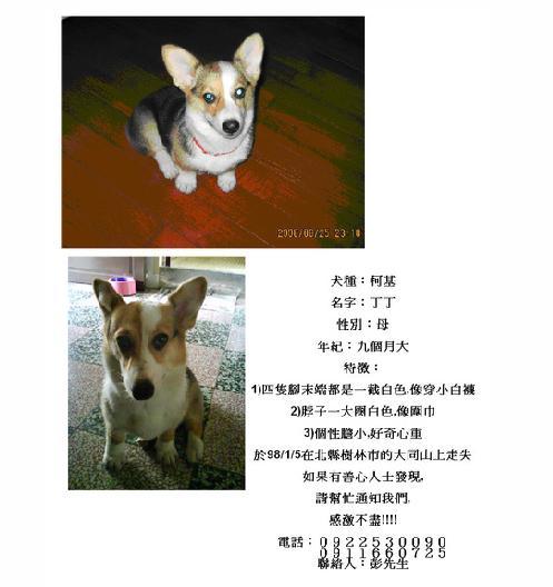 丁丁協尋海報.jpg