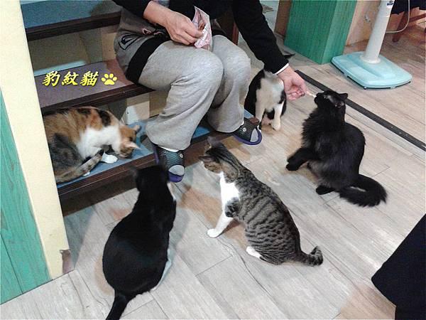 店家餵貓_meitu_15