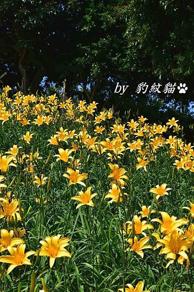 DSC_2162_meitu_7.jpg