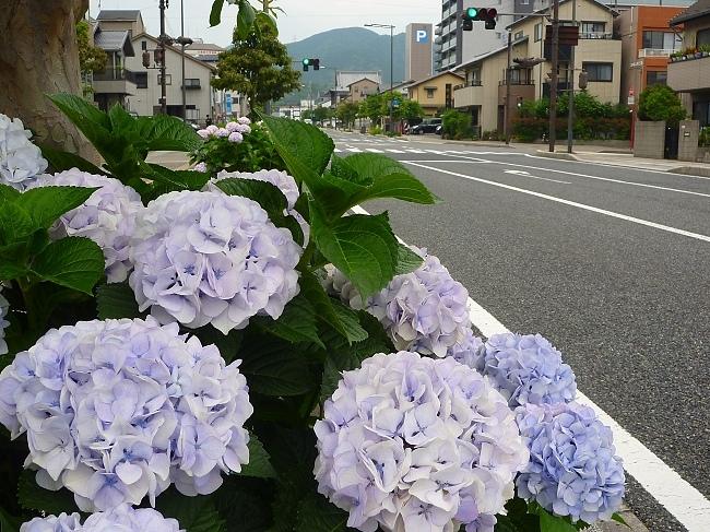 PhotoCap_004.jpg
