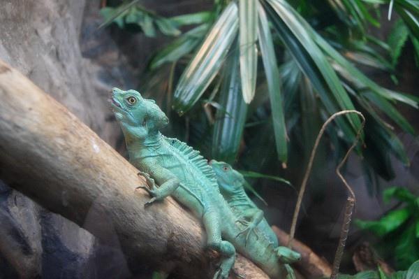 zoo_016.jpg