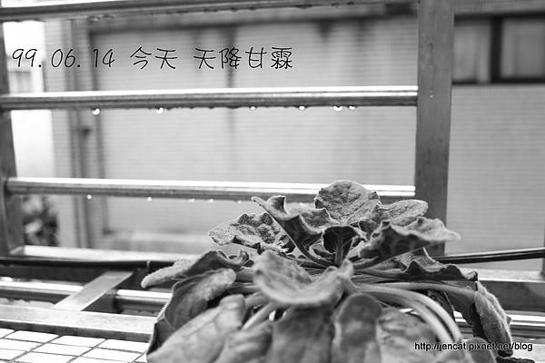 20100614今天天降甘霖.JPG