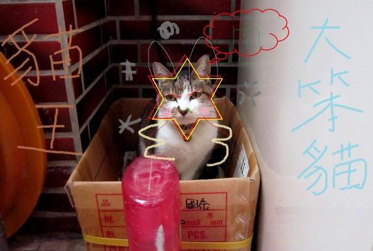 cat king.jpg
