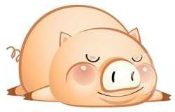 Pig-Sleep.jpg
