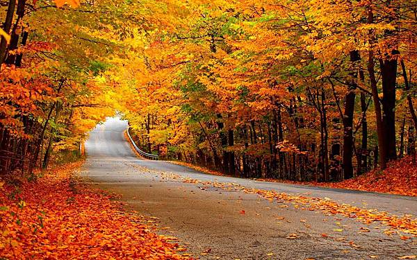 Autumn-Wallpaper-autumn-35867710-1280-800.jpg