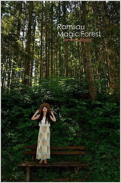 魔法森林一
