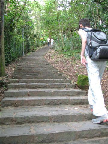 往上走個300M左右,就進入山林,樓梯大概有800M遠