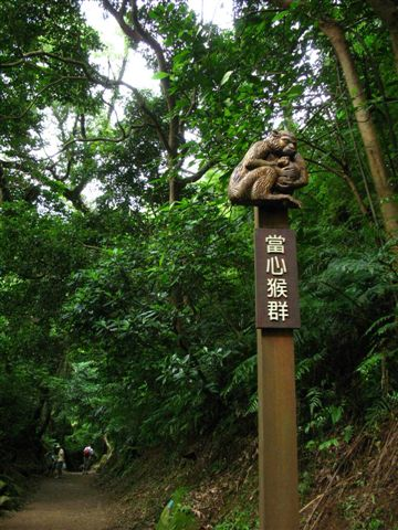 附近有猴洞,所以可能會遇到猴群喔