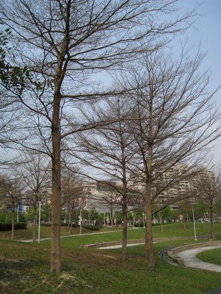 葉子掉光的樹