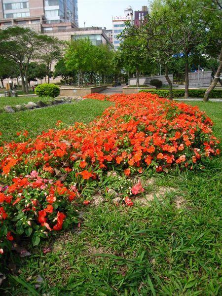 花開的很茂盛