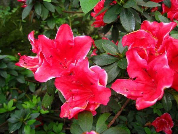 天元宮右方特別的花