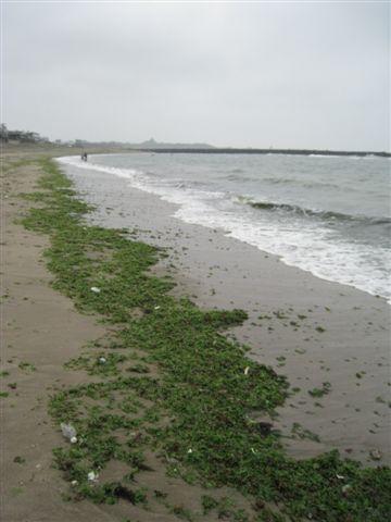 20080413_ 綠色海岸(左)