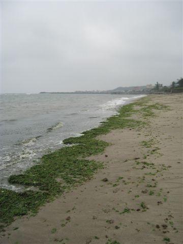 20080413_ 綠色海岸(右)