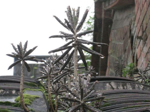 20080413_ 植物近照