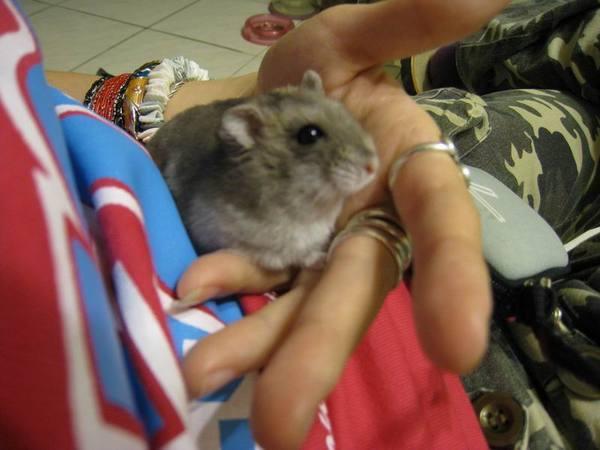 20080412_ 假裝小臉的肥鼠