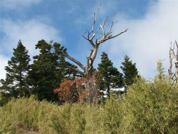 20071124_ 挺立的枯木