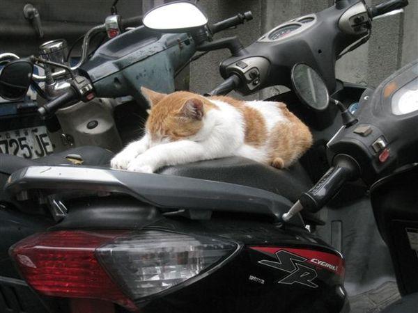 路邊趴在摩托車上睡覺的貓