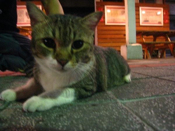 廣州街夜市裡像TEMPO的貓