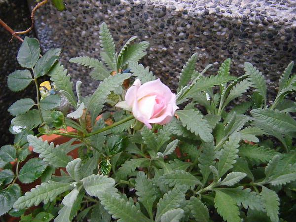 201101garden 014.jpg