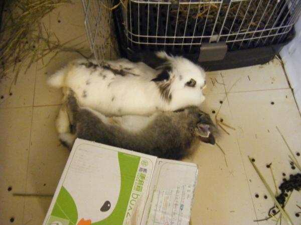 兔子親密照