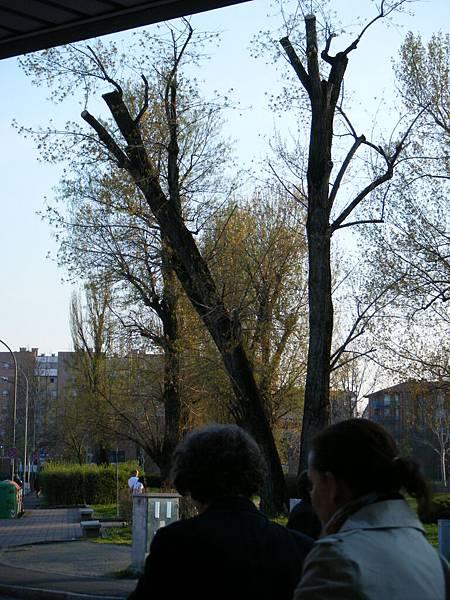 2011波隆那 521.jpg