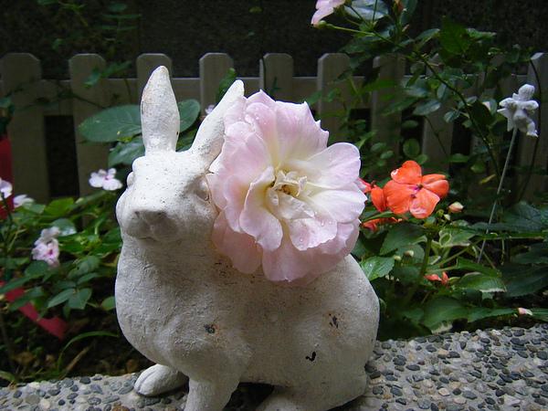 201101garden 009.jpg