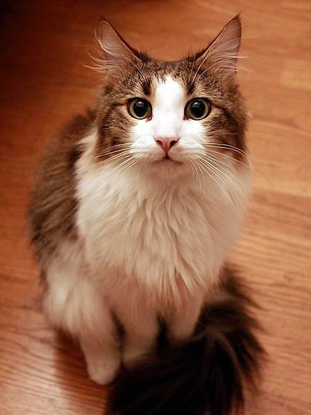 110203 撒嬌的戴蒙貓 002.jpg