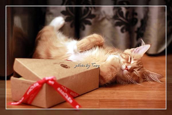 110917~20 收到禮物很開心的泰坦寶 005P01.jpg