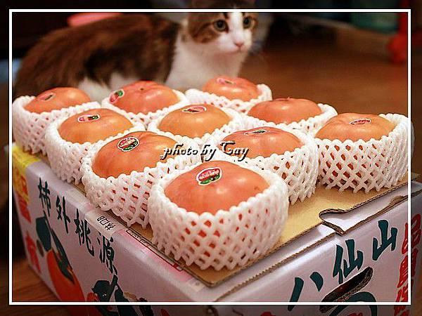 PhotoCap_111108 孟臻家的甜柿 005.jpg