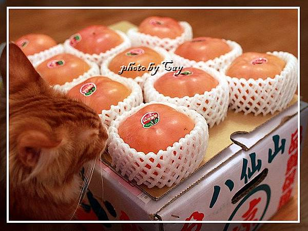 PhotoCap_111108 孟臻家的甜柿 007.jpg