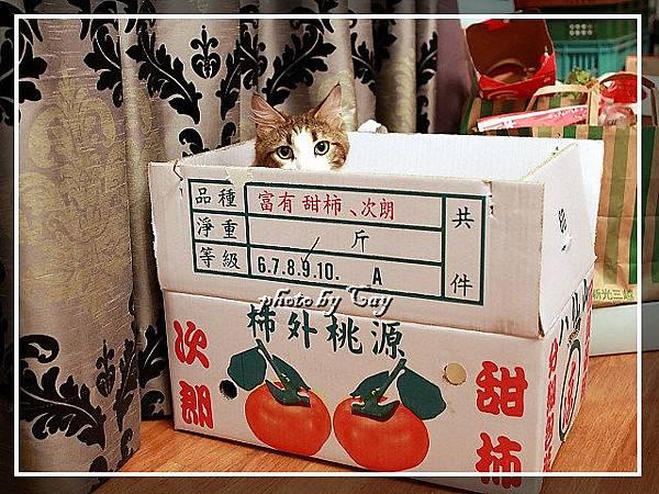 PhotoCap_111108 孟臻家的甜柿 022.jpg