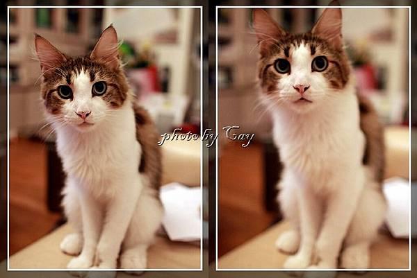 PhotoCap_111106 貓兄弟試拍 001P01.jpg