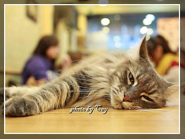 PhotoCap_111111 元氣貓 025.jpg
