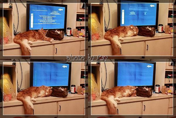 PhotoCap_120115 華國桂華蘿蔔糕 001P01.jpg