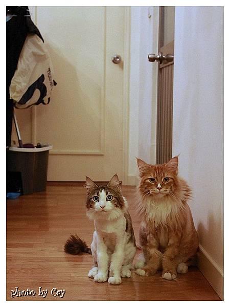 PhotoCap_120722 房門外的貓兄弟 008P01