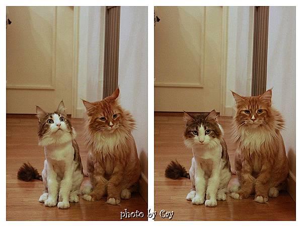 PhotoCap_120722 房門外的貓兄弟 005P01