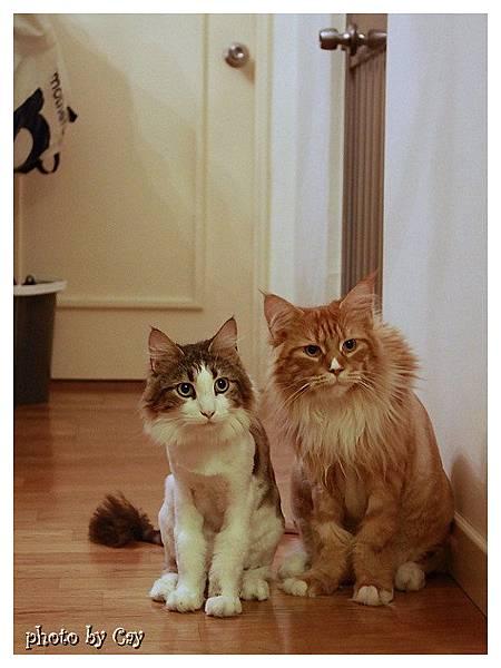 PhotoCap_120722 房門外的貓兄弟 010P01