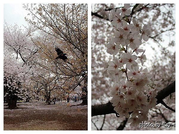 PhotoByCay_130329 090 (2)P01